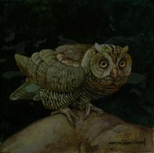 Siau Scops-owl, Siau Scops Owl by AFC