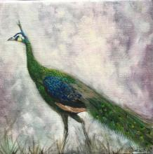 Green Peafowl, Green-necked Peafowl by AFC