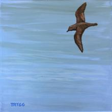 Beck's Petrel by AFC