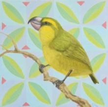 Maui Parrotbill by AFC