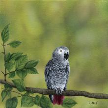 Timneh Parrot by AFC