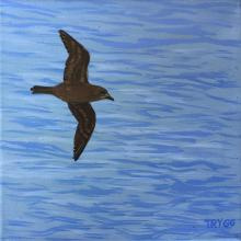 Henderson Petrel by AFC