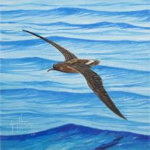 Jamaican Petrel by AFC