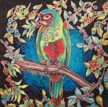 Goias Parakeet by AFC