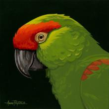 Thick-billed Parrot by AFC