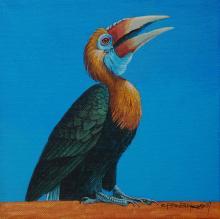 Narcondam Hornbill by AFC