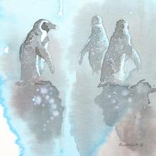 African Penguin, Jackass Penguin, Black-footed Penguin by AFC