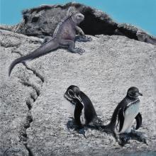 Galapagos Penguin, Galpagos Penguin by AFC