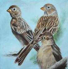 Worthen's Sparrow by AFC