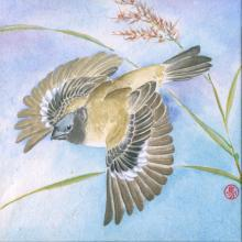 Ibera Seedeater by AFC