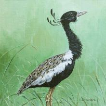Lesser Florican, Likh by AFC