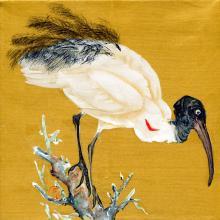 Madagascar Sacred Ibis by AFC