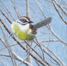 Zapata Sparrow, Cuban Sparrow by AFC