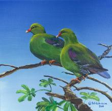 Timor Green-pigeon, Timor Green Pigeon, Timor Green-Pigeon by AFC