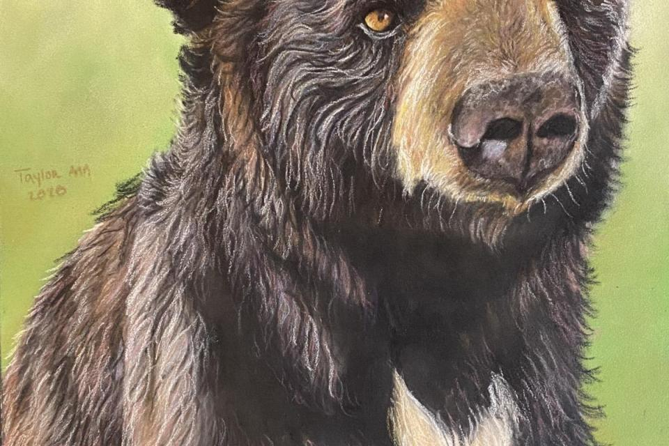 Add Artwork | Wallhanging by Taylor Ann | Artists for Conservation