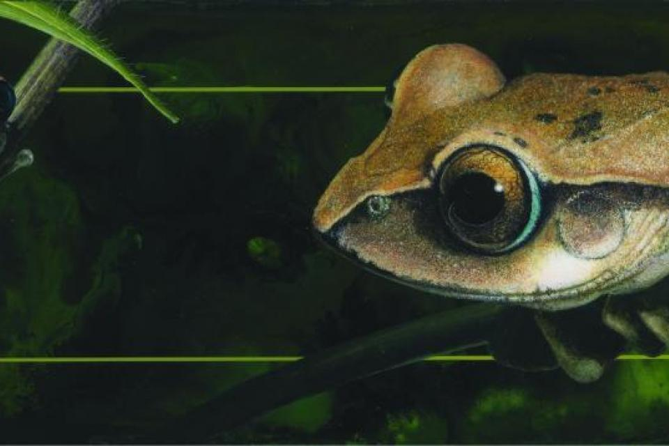 Edit Artwork   Wallhanging by David Kitler   Artists for Conservation