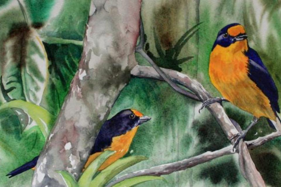 Add Artwork | Wallhanging by Kitty Harvill | Artists for Conservation