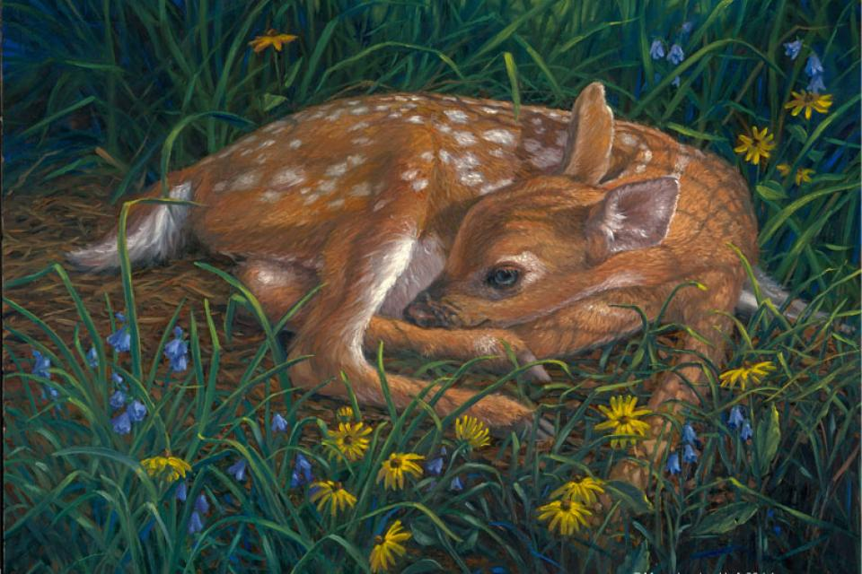 Add Artwork | Wallhanging by Mary Louise Holt | Artists for Conservation