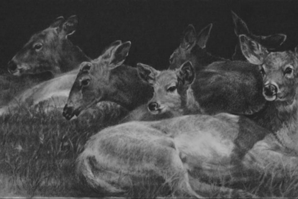 Edit Artwork | Wallhanging by Amy Larson | Artists for Conservation