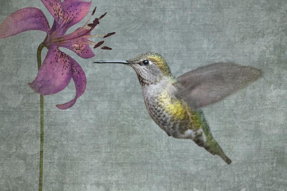 Edit Artwork | Photograph by June Hunter | Artists for Conservation