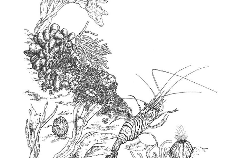 Edit Artwork | Wallhanging by Susan Shimeld | Artists for Conservation