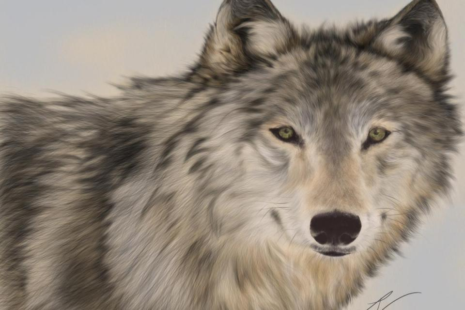 Edit Artwork   Wallhanging by Lyn Vik   Artists for Conservation