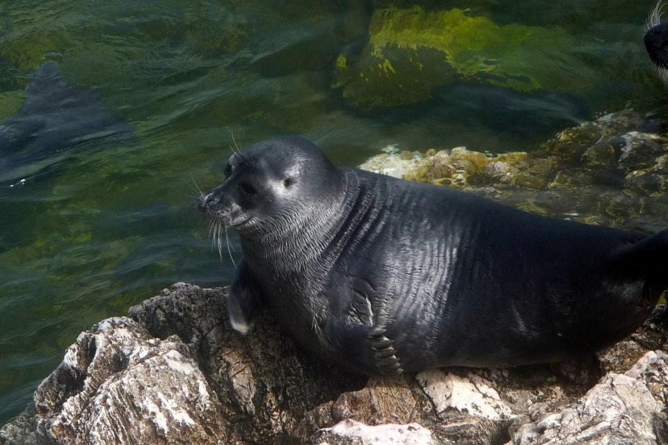 <em>Edit Conservation Project/Cause</em> The Freshwater Seals of Lake Baikal, Russia - 7th AFC Flag Expedition  | Terry Woodall