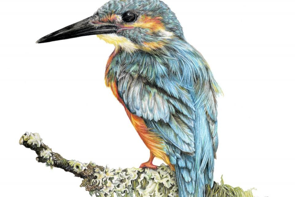 Edit Artwork | Wallhanging by Jane Zimmermann | Artists for Conservation