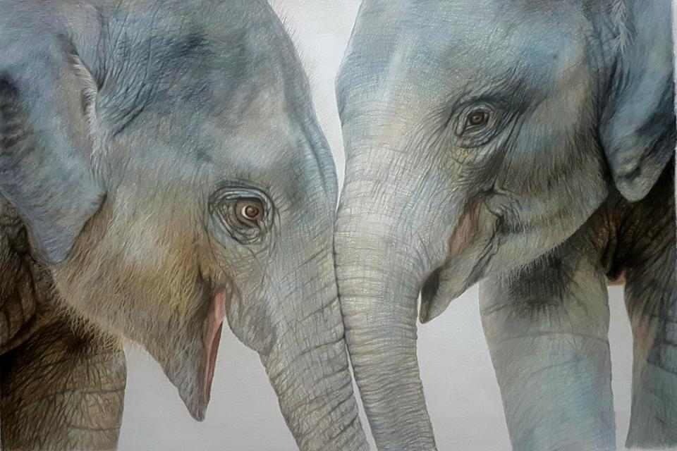 <em>Edit Conservation Project/Cause</em> Best Friends  - Helping MONITOR save lesser known species from extinction through both the legal and illegal wildlife trade   Charlotte Williams