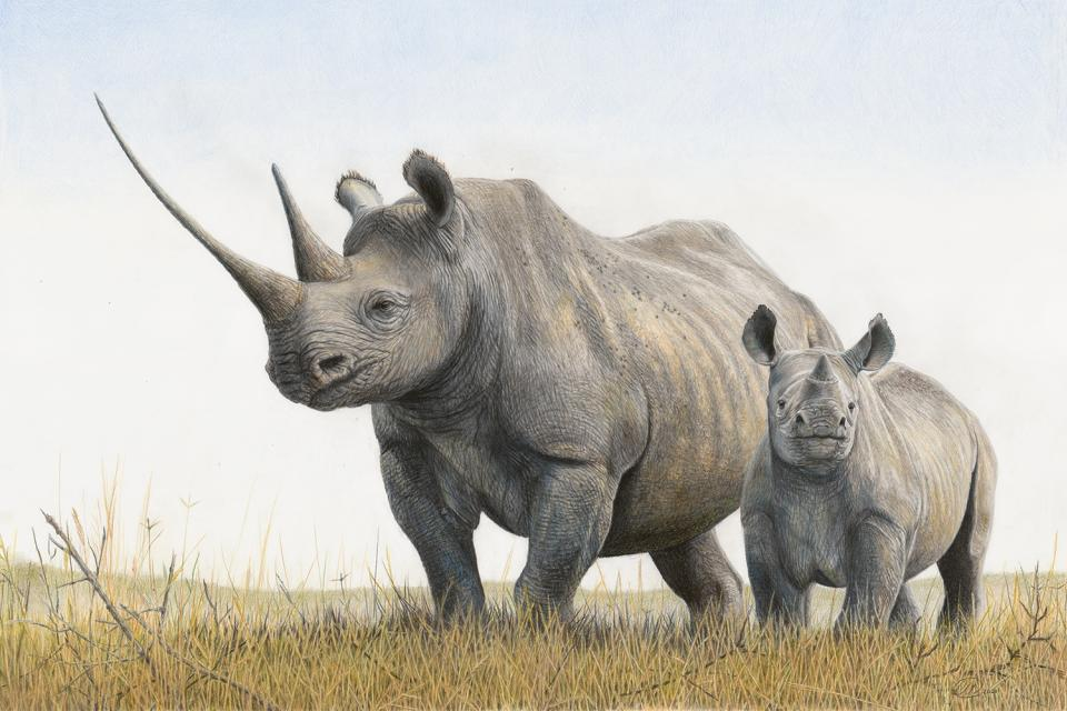 <em>Edit Conservation Project/Cause</em> Waiwai and Delia - Signed Limited Edition Print - Large - Raising funds for Lewa Conservancy | Charlotte Williams