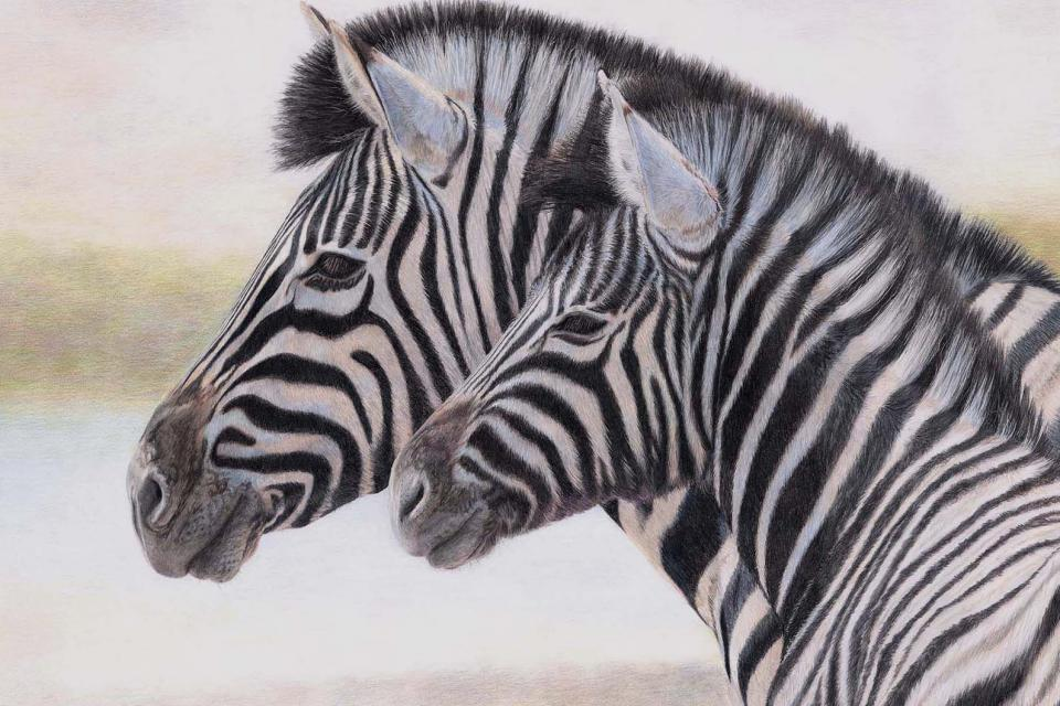 Create Conservation Project/Cause - Raising funds for Ol Pejeta and Helping Rhinos | Charlotte Williams