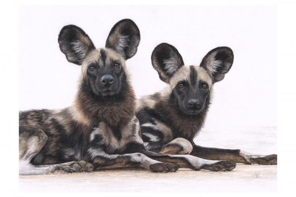 <em>Edit Conservation Project/Cause</em> We're All Ears - Helping to fund 3 painted dog projects through TUSK | Charlotte Williams