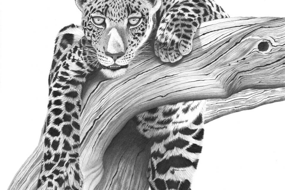 Add Artwork | Wallhanging by Carol Stratman | Artists for Conservation