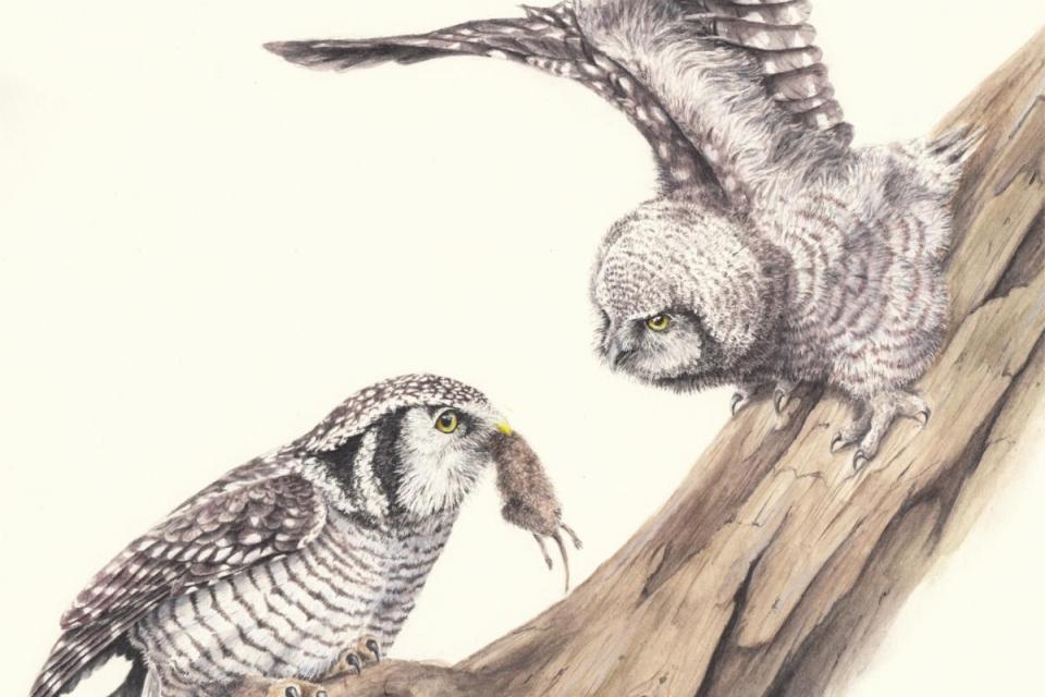 Edit Artwork | Wallhanging by Corinna Langebrake | Artists for Conservation