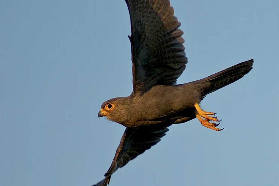 Create Conservation Project/Cause - Raptor conservancy | Douglass Lockyer