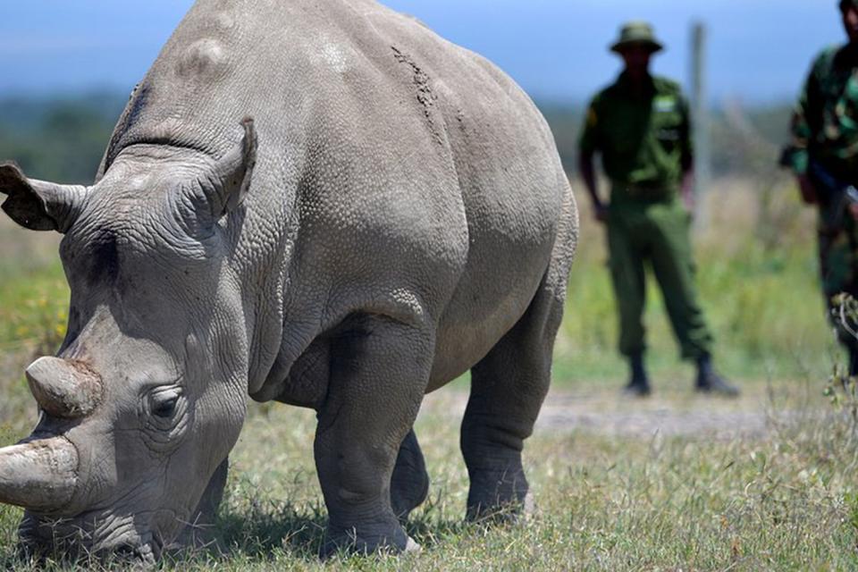 <em>Edit Conservation Project/Cause</em> Ol pejeta - Northern White Rhino Assisted Fertilization Programme   Douglass Lockyer