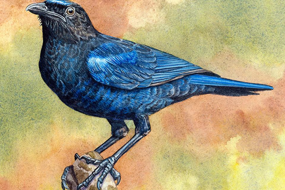 Edit Artwork | Wallhanging by Vicky Earle | Artists for Conservation