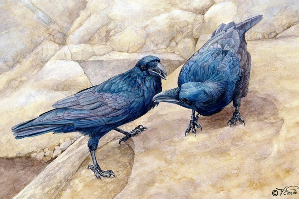 Add Artwork | Wallhanging by Vicky Earle | Artists for Conservation