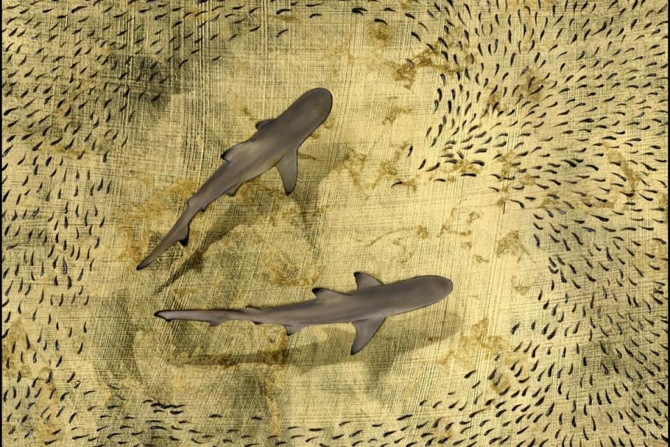 | Wallhanging by Nick Oneill | Artists for Conservation