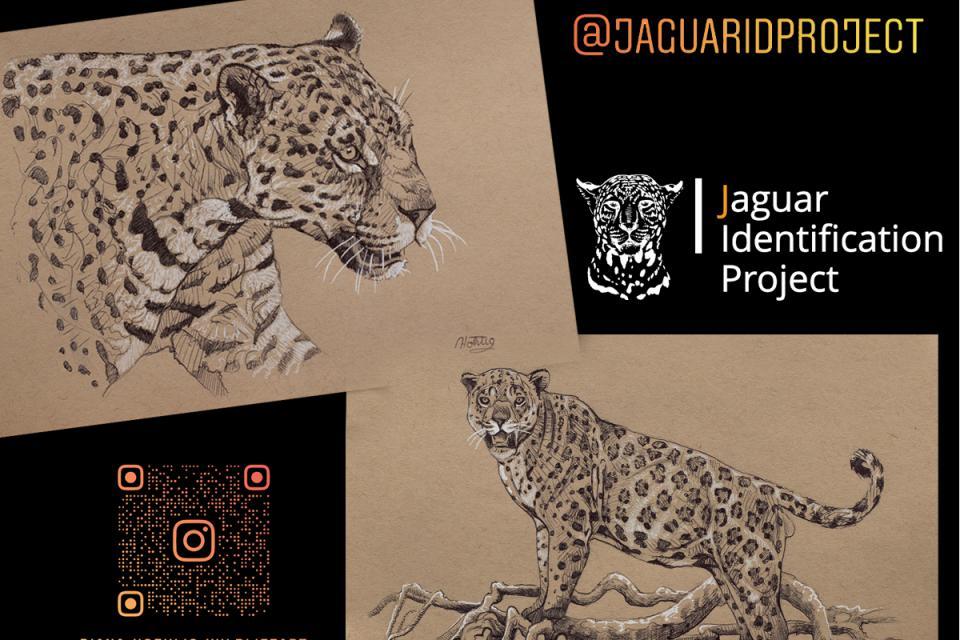 <em>Edit Conservation Project/Cause</em> Sketching for Jaguars - Jaguar Identification Project | Diana Hoehlig
