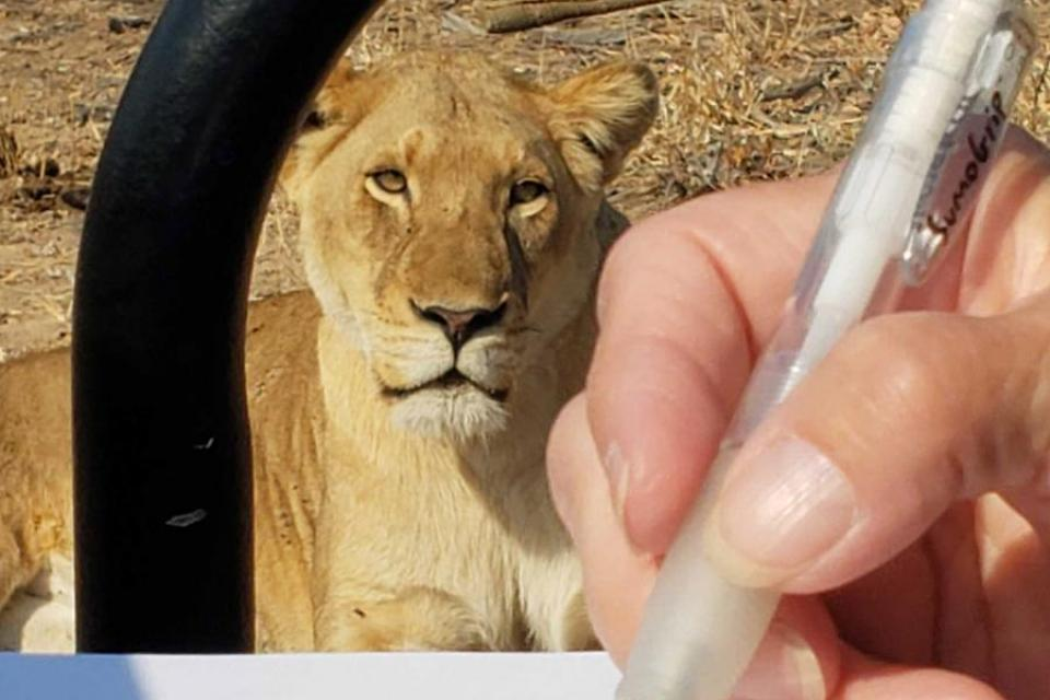 2020 African Art Safaris, South Africa with Alison Nicholls