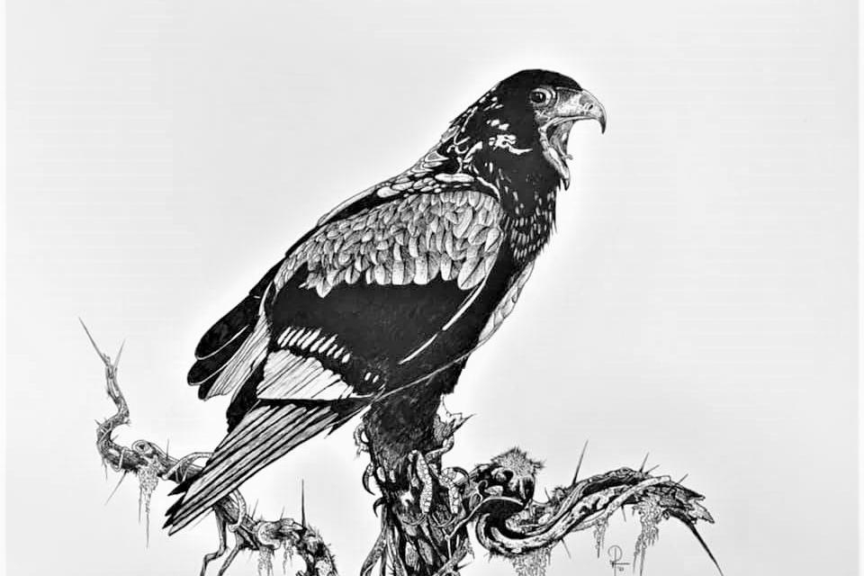 Birding Africa and More Art and Photography HISER with Doug Hiser