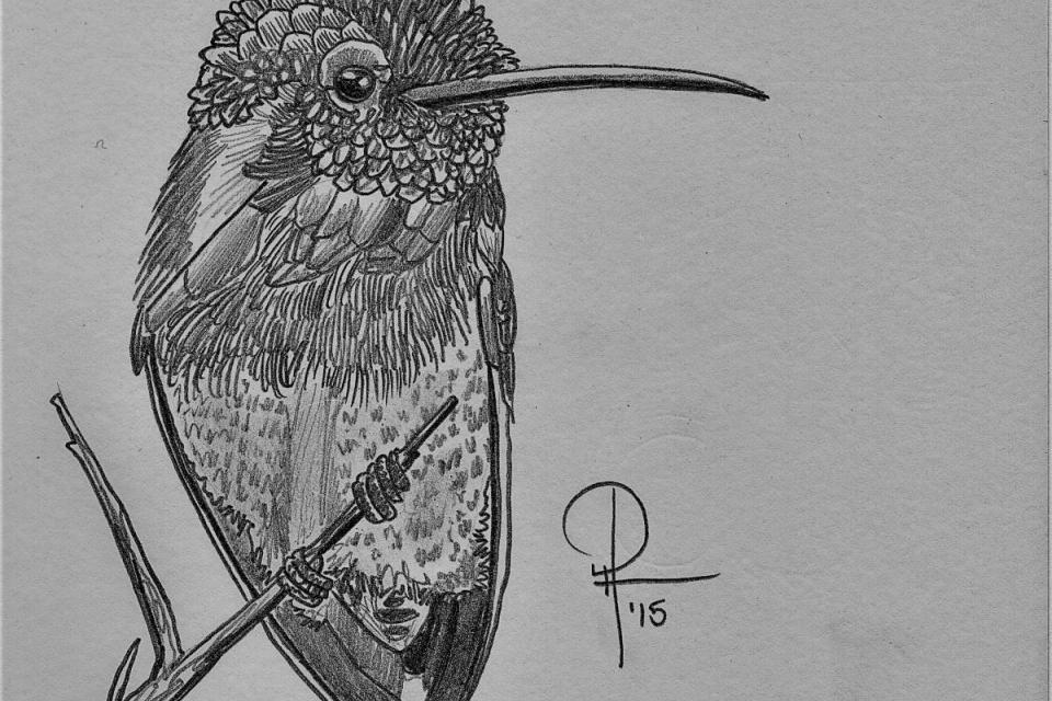Ink Hummingbird Demo Doug Hiser with Doug Hiser