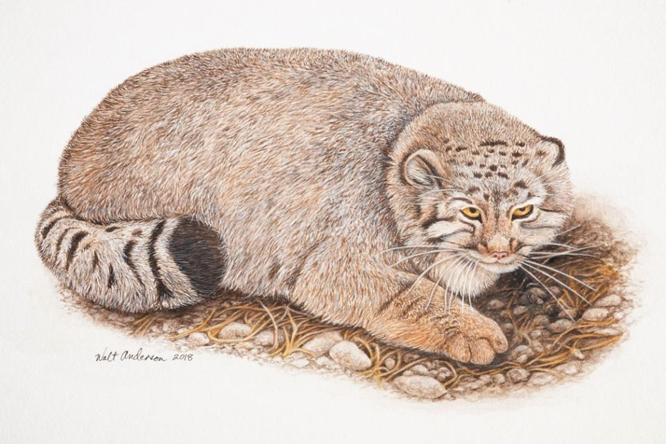 Edit Artwork | Wallhanging by Walt Anderson | Artists for Conservation
