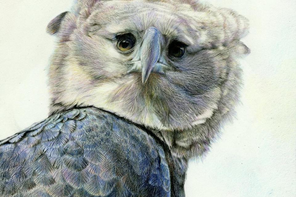 Edit Artwork   Wallhanging by Nick Day   Artists for Conservation
