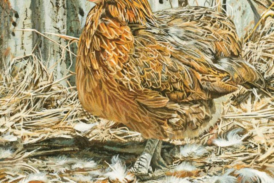 Add Artwork   Wallhanging by Stephen Jesic   Artists for Conservation