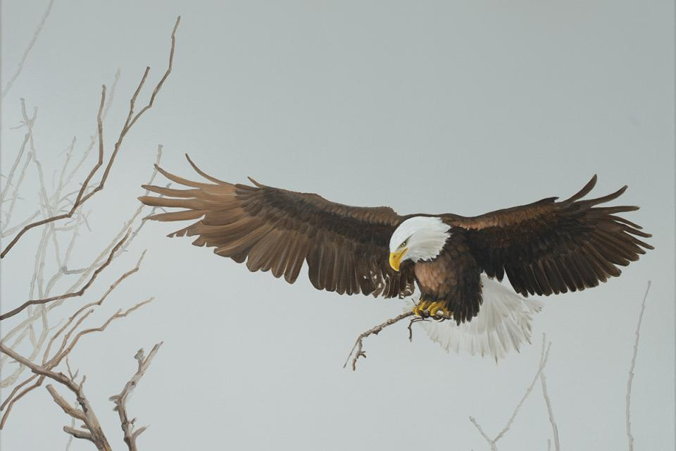 Edit Artwork   Wallhanging by Susan Gosevitz   Artists for Conservation