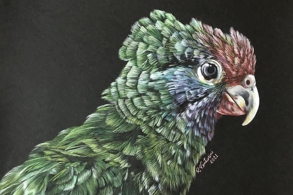 Edit Artwork | Wallhanging by Rosana Venturini | Artists for Conservation