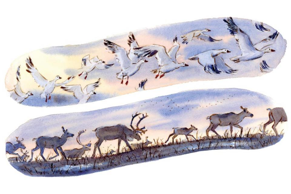 Add Artwork   Wallhanging by Genevieve Irwin   Artists for Conservation