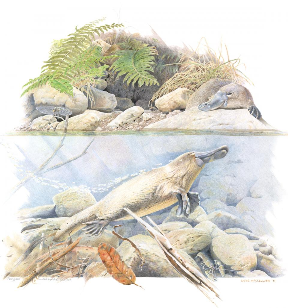 Add Artwork | Wallhanging by Chris McClelland | Artists for Conservation